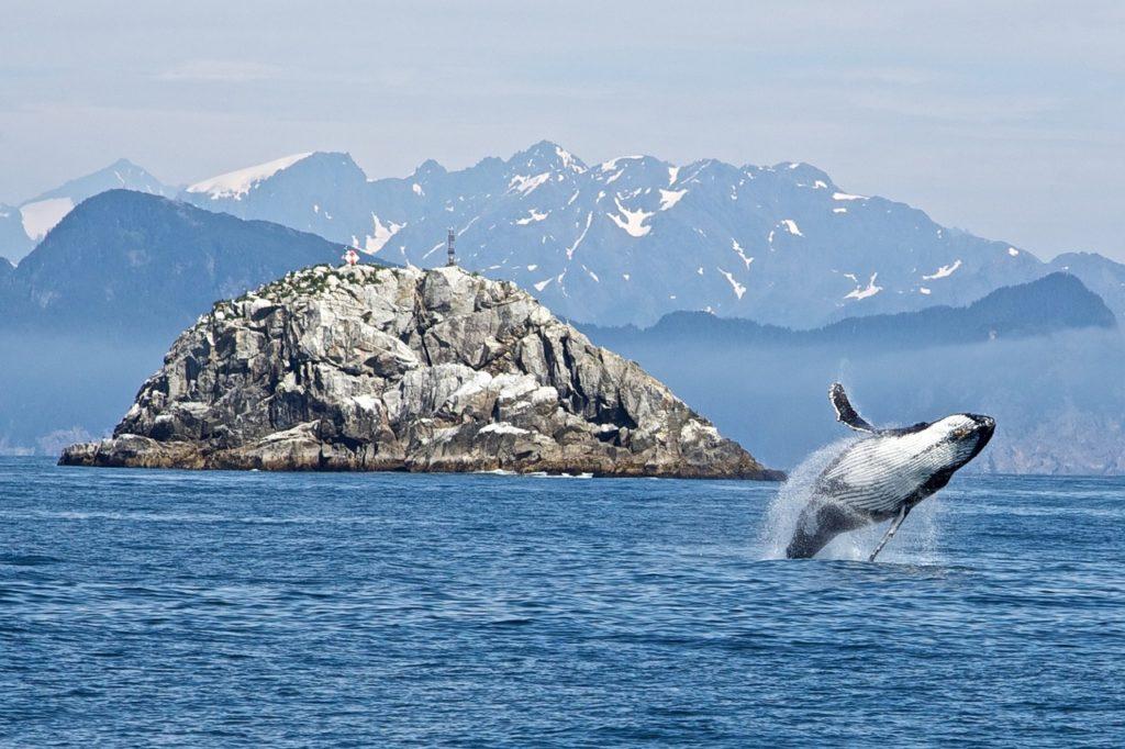 balena in Alaska